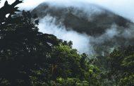 Sådan kan du være med til at redde regnskoven